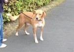 Rory (Rescue Me- Romanian Dog Rescue, Leicestershire)