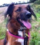 Rosie (Freshfields Animal Rescue, Liverpool)
