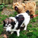 Toby and Freddie (Birch Hill Dog Rescue, Shropshire)