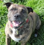 Bluebell (Freshfields Animal Rescue, Liverpool)