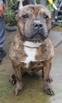 Butch (Freshfields Animal Rescue, Liverpool)