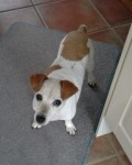 Honey (Oldies Club, fostered Swindon, Wilts)