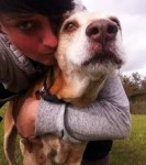 Mikey (Fidos Dog Rescue, fostered in Derbyshire)