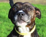 Katie (RSPCA West Hatch, Somerset)