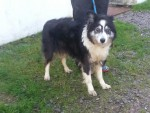 Maggie (Croft Rescue Kennels, South Wales)