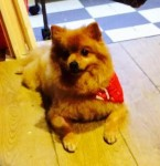 Suzi (All Animals Rehome and Rescue, Essex)
