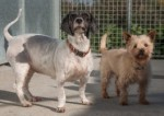 Bella and Charlie (RSPCA Danaher Animal Home, Essex)