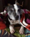 Betty (Animal Helpline, fostered South Lincolnshire)