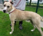 Buster (Private rehoming, kennelled Sheffield)