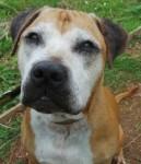 Clive (Dogs Trust West Calder, Scotland)