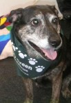 Jenny (Jerry Green Dog Rescue, South Lincolnshire)