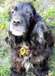 Linzi (Many Tears Animal Rescue, fostered Sheffield)