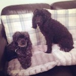 Molly and Roxy (Four Paws Animal Rescue, fostered South Wales)