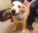 Bootiful, gregarious Monty (Oldies club, fostered Hampshire)