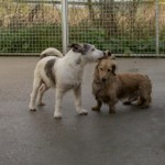 Monty and Dexter(RSPCA Danaher Animal Home, Essex)