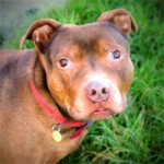 Alfie (RSPCA Danaher Animal Home, Essex)