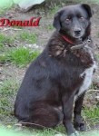 Donald (Safe Rescue, fostered Great Yarmouth)
