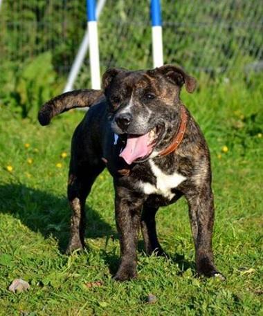 Beano (Arundawn Dog Rescue, West Sussex)
