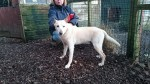 Bobby (Arundawn Dog Rescue, West Sussex)