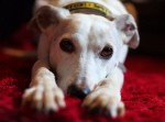 Pretty Perdy (Oldies Club, fostered South East Cornwall)