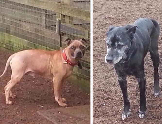 Duke and Prince (Islay Dog Rescue, Ayrshire)