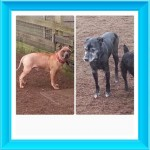 Duke and Prince (Islay Dog Rescue, Ayrshire)