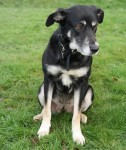 Lady (RSPCA Chesterfield and North Derbyshire Branch)