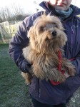 Poppy (Chilterns Dog Rescue Society, Hertfordshire)