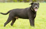 Zac (Worcestershire Animal Rescue Shelter)