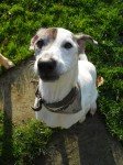 Zippo (Four Paws Animal Rescue, fostered Port Talbot in Wales)