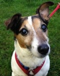 Bailey (Stokenchurch Dog Rescue, Bucks)