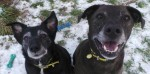 Barney and Cara (Dogs Trust West Calder, Scotland)