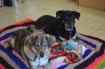Tuppence and Belle (Battersea Dogs and Cats Home, Old Windsor)