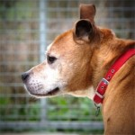 Harry (RSPCA Danaher Animal Home, Essex)