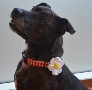 Martha (Battersea Dogs and Cats Home, Old Windsor)