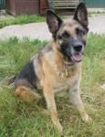 Sasha (Freshfields Animal Rescue, Liverpool)