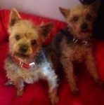 Tara and Sally (Pawz for Thought, Sunderland)