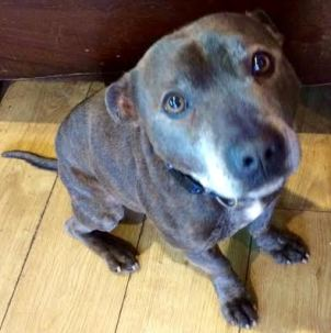 Soldier (All Animals Rescue and Rehome, Essex)