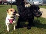 Scamp and Blakey (Stokenchurch Dog Rescue, Bucks)