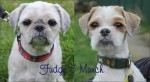 Fudge and Munch (Freshfields Animal Rescue, Liverpool)