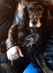 Cuddly Snuggly Jack (Oldies Club, fostered Essex)