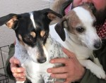 Milly & Pebbles (Ark Animal Rescue, Lincolnshire coast)