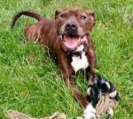 Jordie (Animal Helpline, kennelled Rutland)