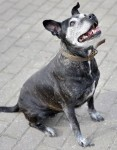 Tie (RSPCA Essex South and Southend)