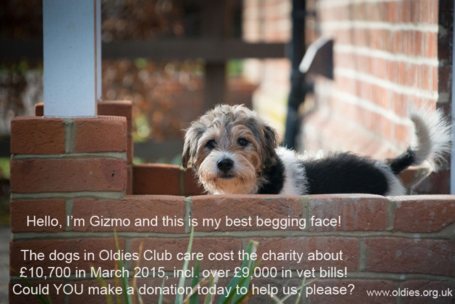 Gizmo vet bill appeal April 2015, Oldies Club, senior dogs, dog rescue