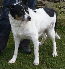 Kim (Stray Action for Dogs, Durham)