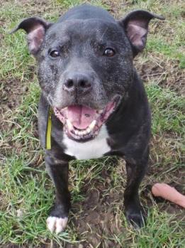 Thai (Dogs Trust West Calder, Scotland)