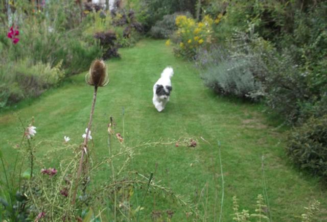Web Charlie garden