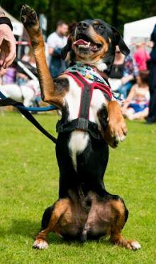 #AdoptME 0300 123 0740 - ©Paparazzi VIP Pets Photography - 07730165546 samantha@paparazzivip.com