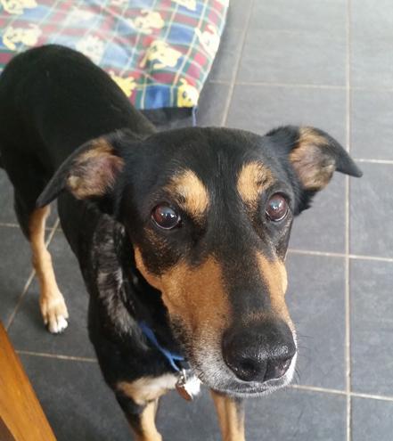 Ellie, Oldies Club sponsor dog